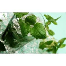 10ml - Mojita (Hangsen)